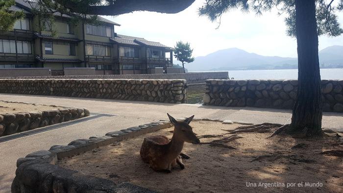 Ciervo Miyajima Itsukushima