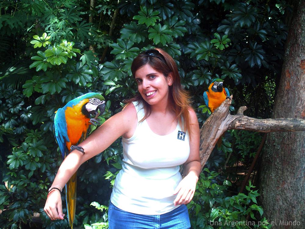 guacamayos en parque das aves